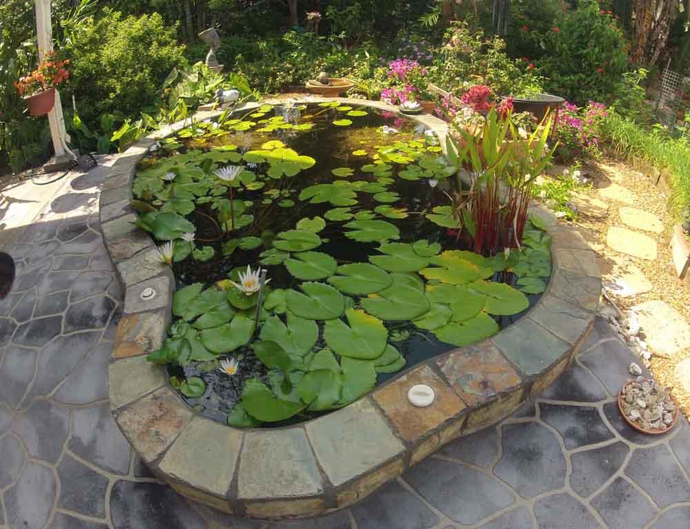 Robin's Pond
