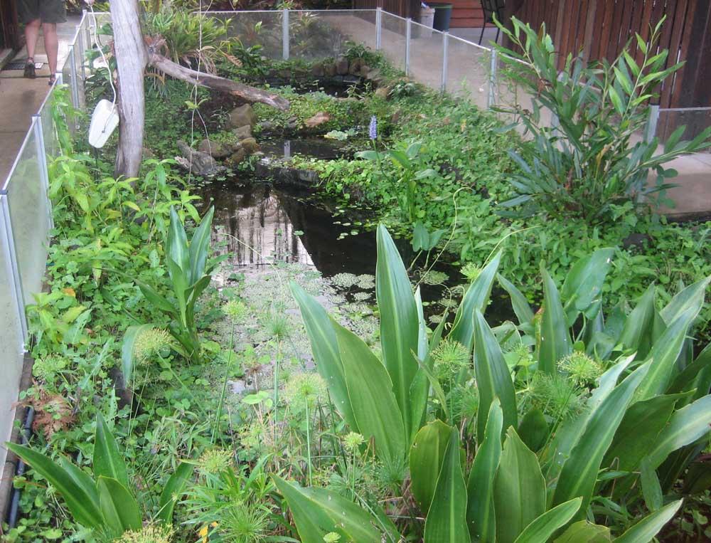 Bruce's Pond