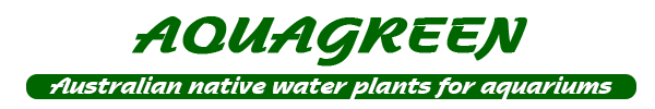 Aquagreen, Home of native Australian water plants for your aquarium.